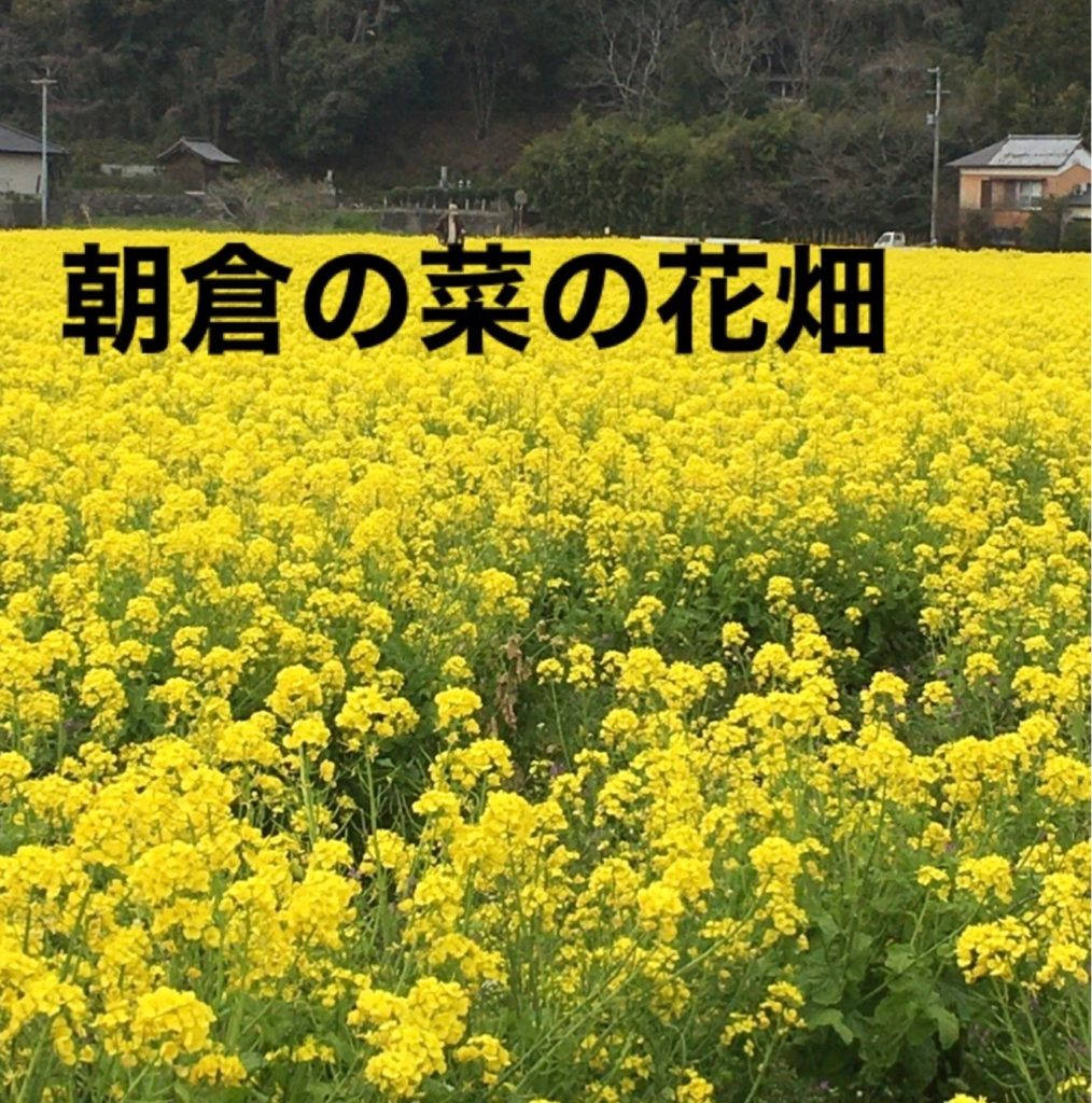 菜の花を見に行きました。